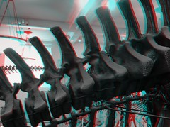 apatosaurus-grey-anaglyph_14756785303_o (irrational.photography) Tags: rational irrational photography photo irrationalphotography rationalphotography irrationalphoto montreal quebec canada anaglyph stereo stereograph picture red cyan blue magenta 3d anaglyphs fuji fujifilm w3 finepix
