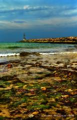Montauk Inlet, Montauk, NY (HarrySchue) Tags: montauk spring seashore seascape landscape jetty oc rocks seaweed nikon d800e bwfilters