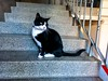 ClaireFisher 2 (allybeag) Tags: xperia phone phonepic clairefisher cat stair step