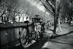 bike with bokeh@Kö, Düsseldorf 5 (Amselchen) Tags: bike bicycle water trees street season spring mono monochrome bnw blackandwhite shadow light bokeh blur dof depthoffield sony a7rii alpha7rm2 sigma mc11 sonyilce7rm2 ef50mmf18ii