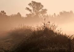 Morgennebel (Wo|f im Schafspelz) Tags: nebel frühnebel handorf peine natur fog