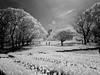 (t*tomorrow) Tags: gx100 infrared monochrome 白黒 モノクロ 赤外線 万博記念公園
