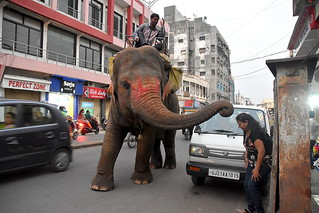 Blessed by an Elephant in busy Street of Navsari
