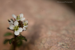 Soft pot (TiffanyLouisePhotography) Tags: garden pot soft focus softfocus spring small macro detail floral flower