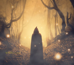 entering the magic forest (olgavareli) Tags: olga vareli forest dream mantle hood magic fireflies photomanipulation trees monochrome