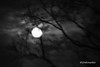 Dark Moon (b&w) (Stephenie DeKouadio) Tags: art artistic artwork abstract abstractart abstractpainting painting darkandlight light outdoor moon night silhouette branches blackandwhite monochrome moonlight