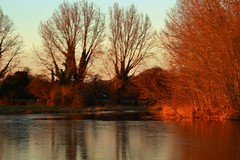 Late sunlight on the trees (Eddie Crutchley) Tags: europe england cheshire outdoor nature beauty sunlight simplysuperb sunset trees lake water reflections goldenlight