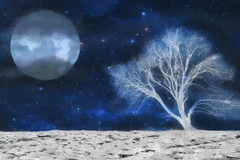 somewhere on a full moon (Hal Halli....happy everything!!) Tags: tree moon abstract wallart homedecor space