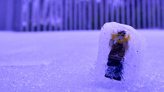 Freeze! (105/365)
