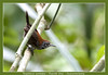 Riverside wren (Jan H. Boer, Nature photographer) Tags: thryothorussemibadius riversidewren oeverwinterkoning birds wrens nature wildlife costarica cararanp nikon d500 afsnikkor200500f56eedvr jan´sphotostream2018