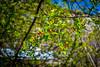 Van Vorst Park in bloom (dkphotonj) Tags: vanvorstpark jerseycity lunchtimephotos