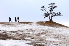 Lake Baikal 貝加爾湖 (MelindaChan ^..^) Tags: lake baikal 貝加爾湖 siberia russia 俄羅斯 西伯利亞 chanmelmel mel melinda melindachan ice snow people nature winter cold frozen life travel pine tree slope alkhon island 奧爾洪島 萨满岩石 shamanka rock 薩滿岩 2018
