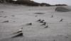 Sandformation (squarenothing_de) Tags: ameland niederlande sand strand muscheln shells beach bokeh eos outside