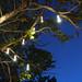 Tree Lights in Jamaica