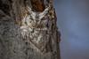 Hidden in Plain Sight (PhillymanPete) Tags: tree megascopsasio camouflage wildlife owl predator nature bird bark raptor birdsofprey cavity easternscreechowl greymorph gray nikon d500