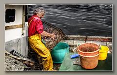 Strome Fisherman