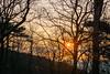 Sunrise in the Wienerwald (a7m2) Tags: wald sonnenaufgang wienerwald föhrenberge perchtoldsdorf mödling loweraustria wandern hiking natuer flora fauna heide frühling