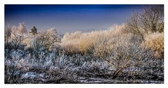 Frosty dawn on the first day of spring, Castlefield Allotments, Eynsford, Kent. (Richard Murrin Art) Tags: frostydawnonthefirstdayofspring castlefieldallotments eynsford kent frost ice richard murrin art photography canon 5d landscape travel images building cool