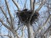JLJ900_1612_edited-1 (Joni James) Tags: bald eagles nest morgan county indiana joni james incubation brooding
