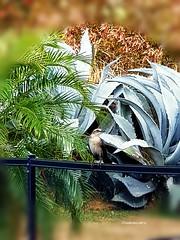 Islands bird Petit oiseau des Isles  #islands #bird #oiseaudesisles #feathers #green #palm #Martinique #life #beauty #travel #Martinique #outside #vacation #lifestyle #visit #lights #carribean (isabella.cabre) Tags: lifestyle vacation carribean islands beauty outside green bird life oiseaudesisles palm martinique visit feathers lights travel