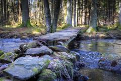 Beauty (Anders Bromell) Tags: fs180408 skonhet fotosondag sweden forest bridge water stream