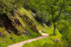 The Buttermilk Trail (buffdawgus) Tags: spring bridgeport sierranevadafoothills southyubariverstatepark canon5dmarkiii lightroom6 topazsw springtime buttermilktrail canon70200mm28l nevadacounty landscape