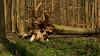 Flower Bed (offroadsound) Tags: tree arbol arbre blumenbett flores flowers fleurs roots fallen spring
