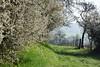 Le printemps est là (Excalibur67) Tags: nikon d750 sigma contemporary 100400f563dgoshsmc paysage landscape nature printemps spring arbres trees flowers fleurs