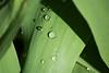 waterdrop (I-Like-My-Fotos-RAW) Tags: waterdrop water drop wassertropfen wasser tropfen leave blatt