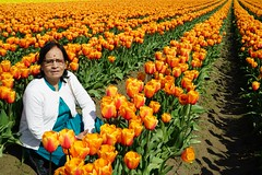 Tulips with Nana and Nani (Sujal Parikh) Tags: rimalgandhi skagitvalley tulips mountvernon washington unitedstates us april 2018 nana nani 484157583333333 122442626666667 rimal gandhi skagit valley
