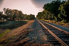West railway track (MJ6606) Tags: flowersplants spring park landscape evening florida nature grass trees track railway