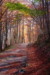 Rosso Verde (SDB79) Tags: natura sentiero foliage autunno trekking camminare molise pizzone bosco foresta foglie