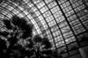 Tuesday in New York_9 (Rick Brandt) Tags: wintergardenatrium nikkor28mm newyork d76 worldtradecenter nikonfm2 film trix unitedstates us