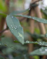 (BrianaRMH) Tags: alberta beddingplants floral flowers gardening greenthings greenhouse growing livingthings parklandgardencentre plantnursery plants botanicaldesign florals indoors reddeer spring