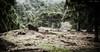 """Pino ReventÓN (Tenisca """"Alexis Martín"""") Tags: reventón ón on reventon reventóntrail reventóntrail2018 trail ultratrail elpaso alexismartín alexismartínfotos lapalma isladelapalma laislabonita islasanmigueldelapalma islabonita naturaleza natura ecología paisaje fotosdelapalma encantorural rural natural flora fauna flores árboles canarias islascanarias laislaverde islacorazón elcampo elmonte luces macaronesia alexismartin alexismartinfotos amf monteyrural vergel paraíso paradise lapalmaisland quéverenlapalma verlapalma visitarlapalma volaralapalma"""