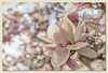 Magnolia Dreams (Rollei Zeiss Distagon 1.4/35) (backsidewalkaround) Tags: blossom magnolia blossoms spring bloom bokeh boke beautiful wonderful pink triangle rolleizeissdistagon1435 trianglebokeh triangularbokeh