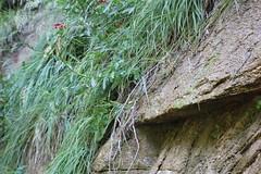 IMG_3627 (Egypt Aimeé) Tags: narrows zion national park canyons pueblos utah arizona