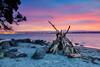 Its the Robinson Crusoe effect... (muzzpix-nz) Tags: sunset mounttrack tauranga beach sculpture woodpile mountmaunganui harbour evening dusk rocks portoftauranga newzealand nz