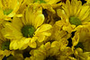 Flowers and Greeting of the Week (Zahidur Rahman (Thanks for the Favs, comments and ) Tags: flower flowers decorated glitter yellow green sanantonio travel floral bright light indoor glossy shiny greetings lovely