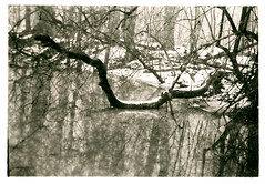 Winter, fog, water and trees… (K.Pihl) Tags: lithprint rodinal1100 canon50mmf18 darkroom selenium canoneos50eelaniie blackwhite standdevelopment agfaapx100 schwarzweiss bw pellicolaanalogica film analog