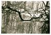 Winter, fog, water and trees… (K.Pihl) Tags: lithprint rodinal1100 canon50mmf18 darkroom selenium canoneos50eelaniie blackwhite standdevelopment agfaapx100 schwarzweiss bw pellicolaanalogica film analog