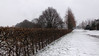 Still Winter (frankdorgathen) Tags: wideangle perspective ruhrpott ruhrgebiet mülheimanderruhr winter path bush tree wind snow landscape