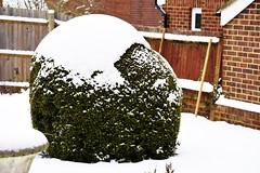 DSC_8983 (PeaTJay) Tags: nikond750 reading lowerearley berkshire nightsky sky outdoor cloud snow plants trees bushes