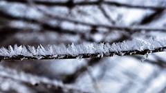 Winter's Miniature Ferns (Bob's Digital Eye) Tags: bobsdigitaleye bokeh canon canonefs1855mmf3556isll depthoffield feb2018 flicker flickr frost hoarefrost icecrystals macro t3i winter winterinmn laquintaessenza