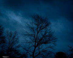 Tears From the Soul (that_damn_duck) Tags: tree nature cloud clouds night nighttime
