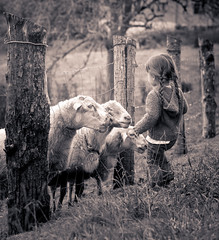 Memories (Bai R.) Tags: sheep nature country life girl curiosity bread outdoor child childhood children youth autumn cold