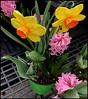 (Cliff Michaels) Tags: iphone8 photoshop pse9 flowers walmart
