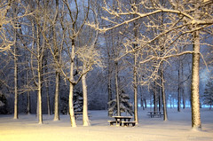 A breath of Winter (Captions by Nica... (Fieger Photography)) Tags: winter weather serene snow storm snowstorm cold covered trees tree branches picnictable parc park nature outdoor quebec canada march forest