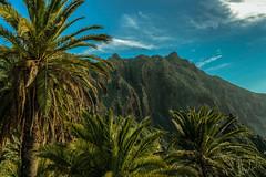 '' Divine Palm '' (HolyWonderWorld) Tags: tropical exotic garden trees palmtrees eden forest mountains nature landscape island canaryislands palms explorer explore travel earth motherearth symbol spiritual healing consciousness summertime summer