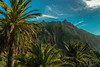 '' Divine Palm '' (HolyWonderWorld) Tags: tropical exotic garden trees palmtrees eden forest mountains nature landscape island canaryislands palms explorer explore travel earth motherearth symbol spiritual healing consciousness summertime summer